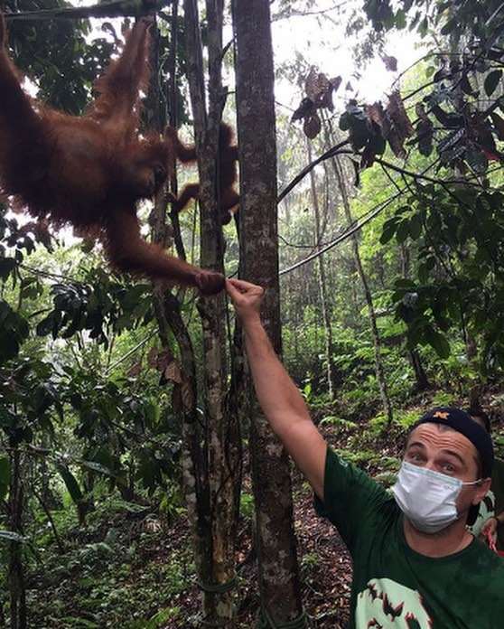 leonardo dicaprio in forest