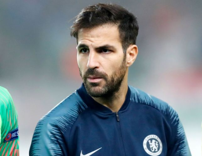 Cesc Fabregas Spanish Professional Football Player