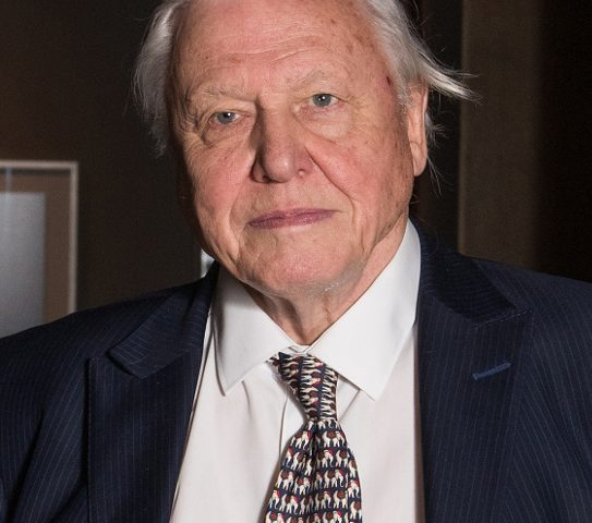 David Attenborough networth 543x480