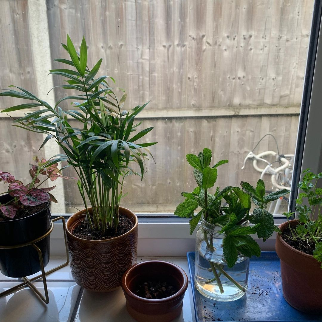 Georgia Post about her Plants